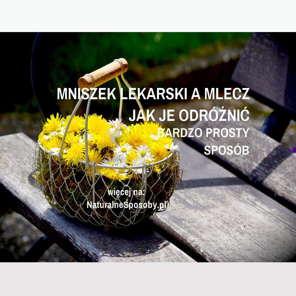 NATURALNESPOSOBY.PL-MNISZEK-LEKARSKI-A-MLECZ