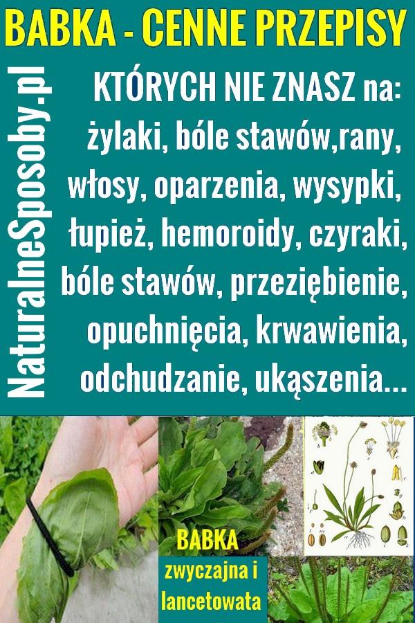 naturalnesposoby.pl-babka-lacetowata-a-babka-zwyczajna-przepisy