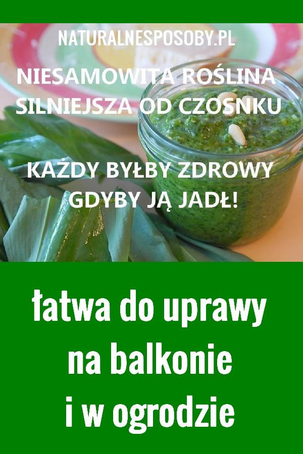 NaturalneSposoby.pl-czosnek-niedzwiedzi